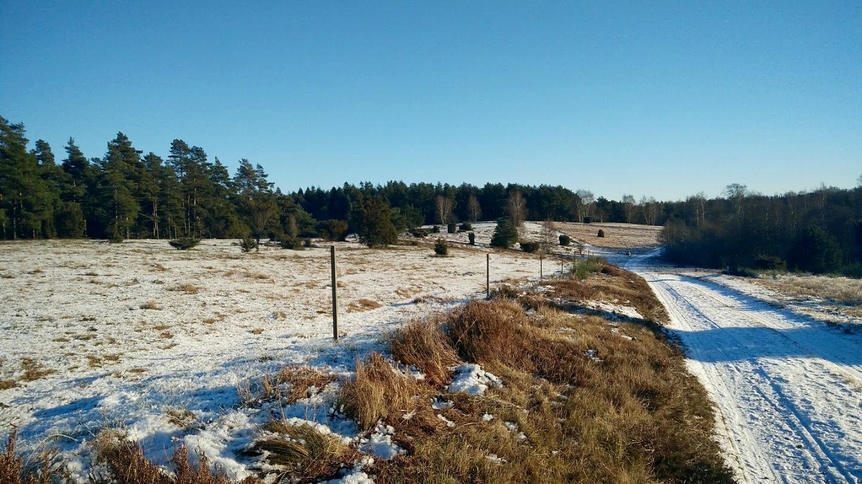 Vinter natur