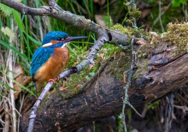 Natur fugleliv i danmark